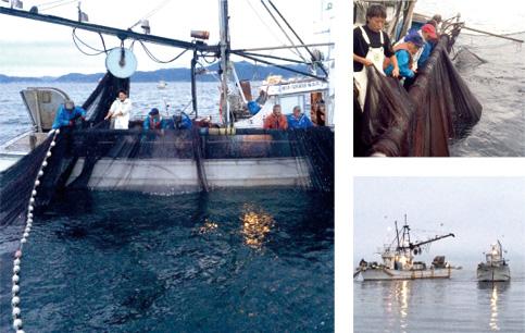 小型旋網漁業の写真