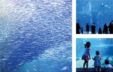水族館へ生体販売の写真